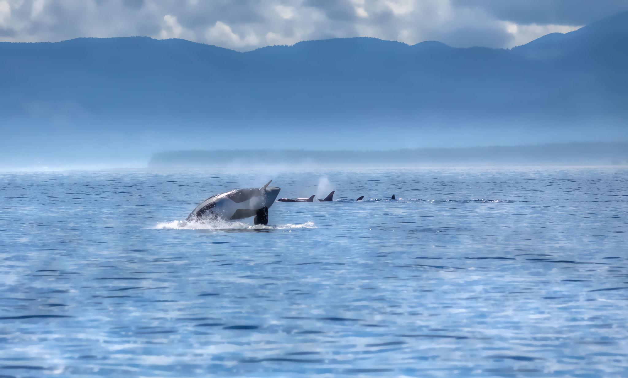 Kaikōura Whale Watching New Zealand