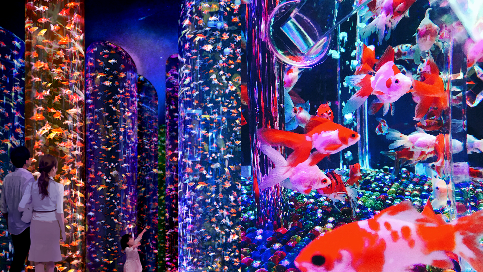 New Art Aquarium With 30,000 Graceful Goldfish Opening In Tokyo In 2020