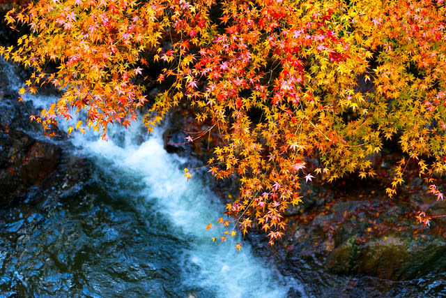The Best Spots to Capture Autumn in Japan