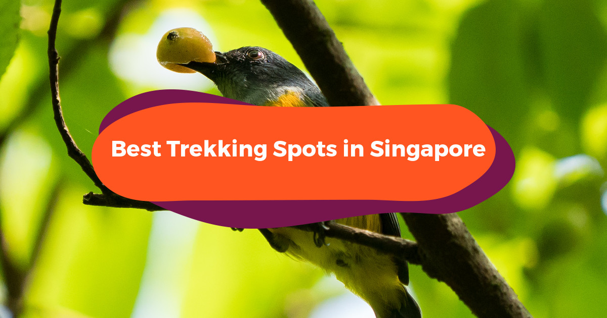 10 Best Hiking Spots Singapore: Where To Wander In The Lion City