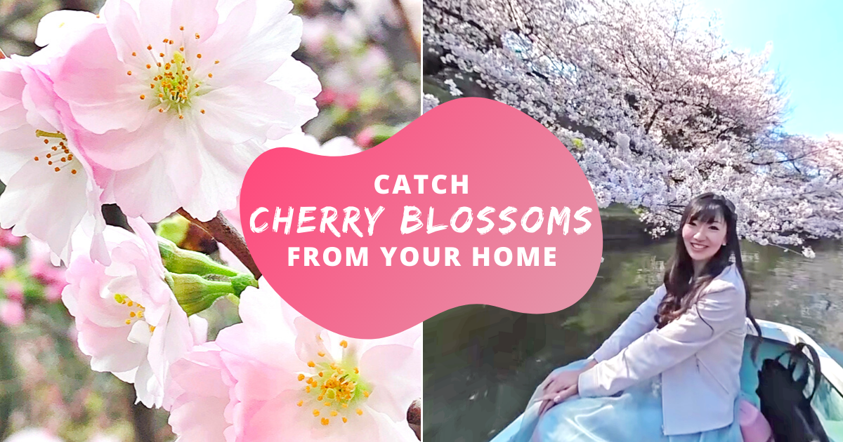360° Videos Of Cherry Blossoms To Take A Break Off Netflix