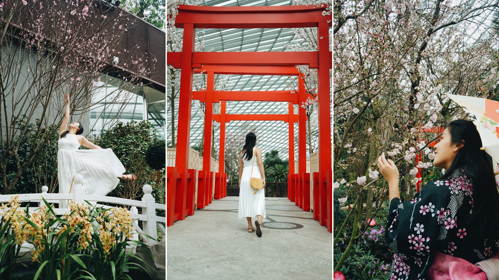 Catch The Cherry Blossoms In Singapore At Sakura Matsuri In Gardens By The Bay