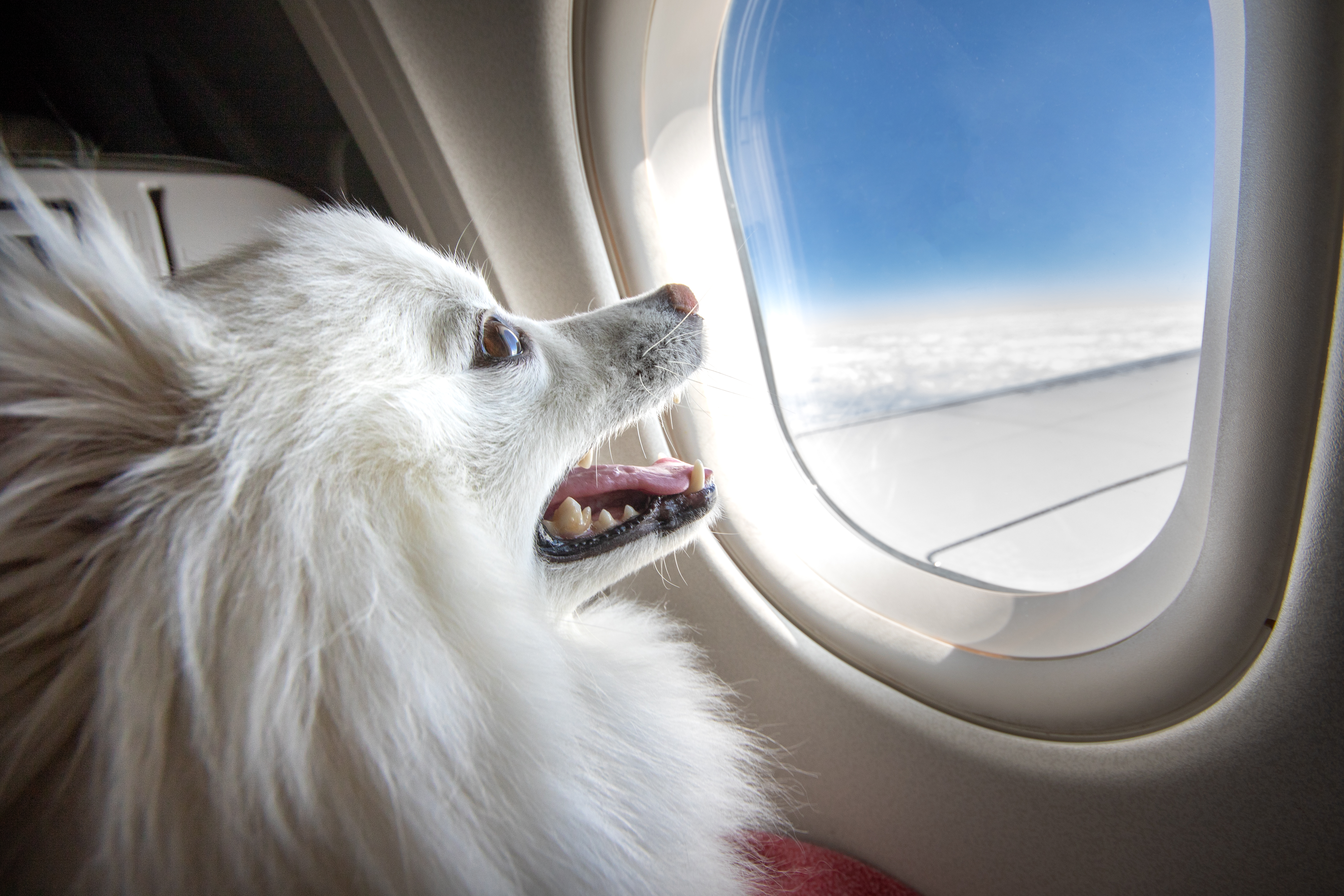 Air Necessities: Your Guide To Plane Travel With Your PETS!