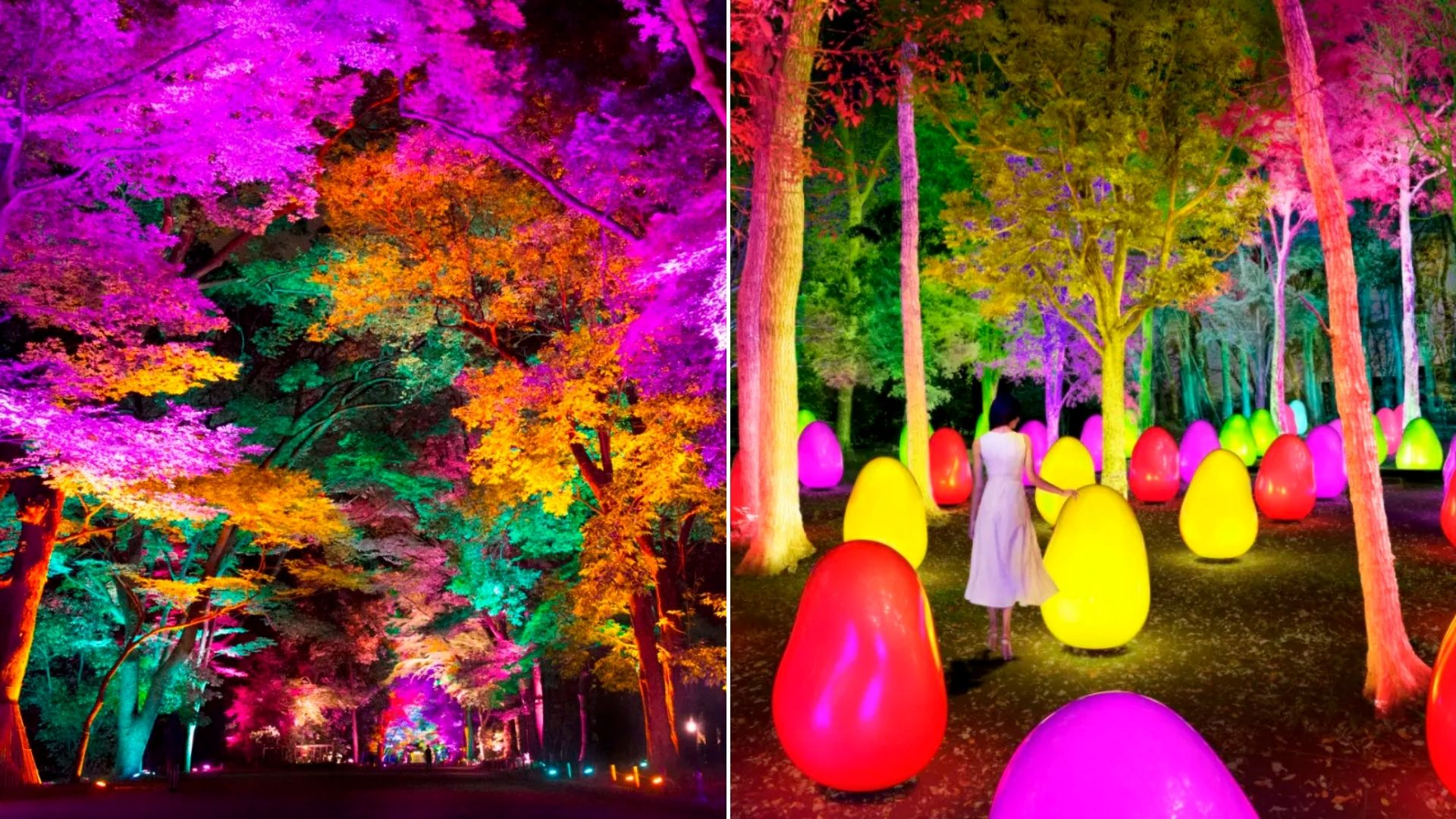 teamLab's New Exhibit Is An Enchanted Acorn Forest Just Outside Tokyo