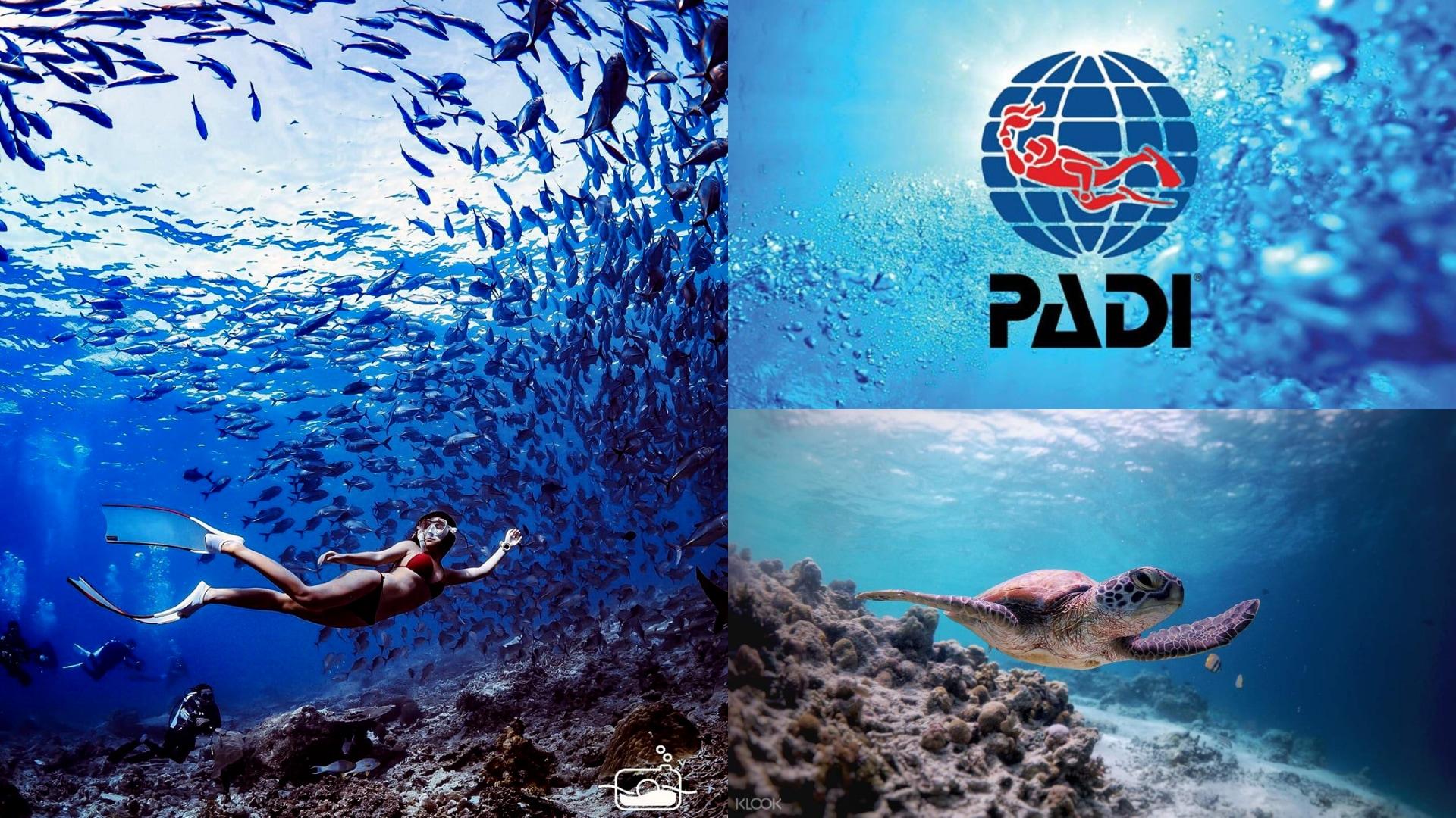 padi diving license 潛水證照