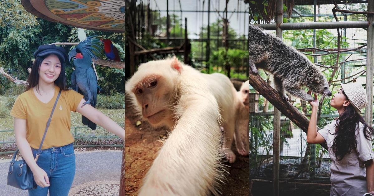Faunaland Ancol Kebun Binatang Eksotis Di Jakarta Utara Untuk Liburan Keluarga Klook Blog