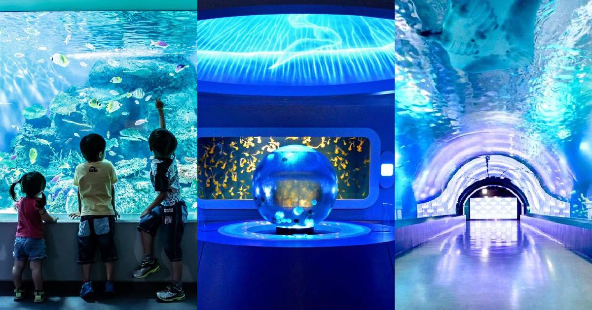 東京近郊 おすすめ水族館10選 次の休日に行くならどこにする?