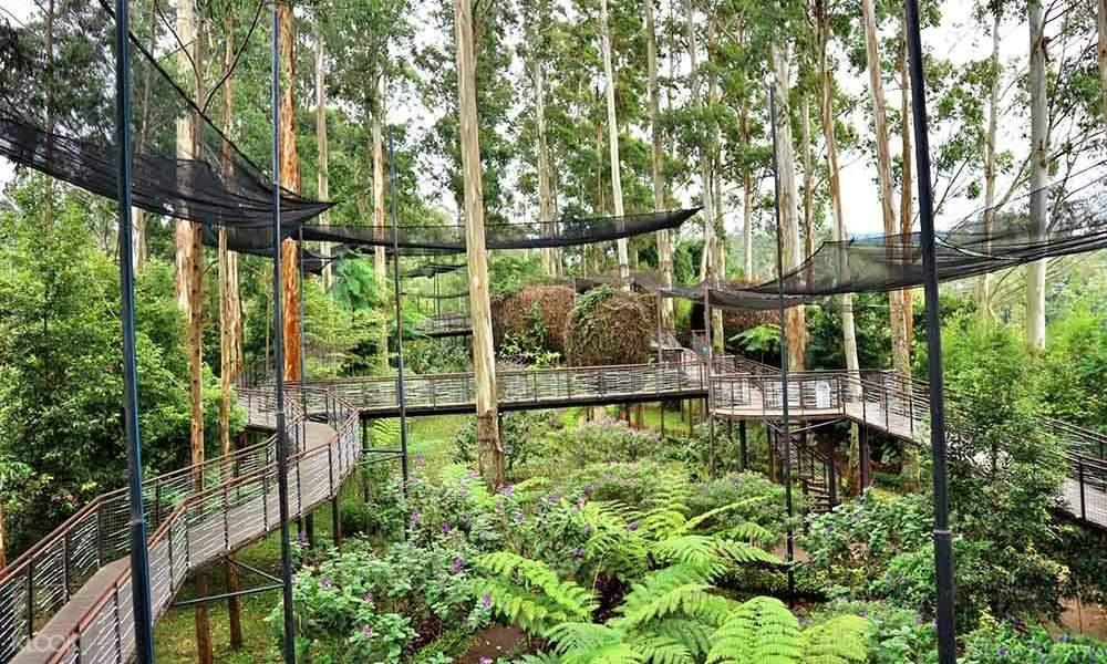 pemandangan jembatan dan jalan setapak di tengah hutan bambu