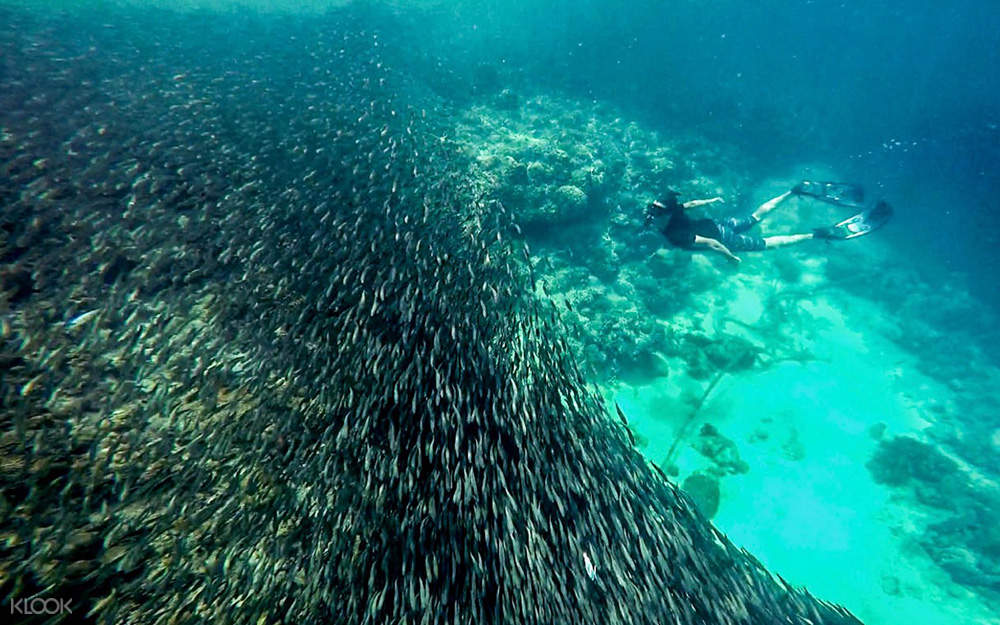 Sardines Run at Pescador Island Snorkeling Join In Day Tour from Cebu