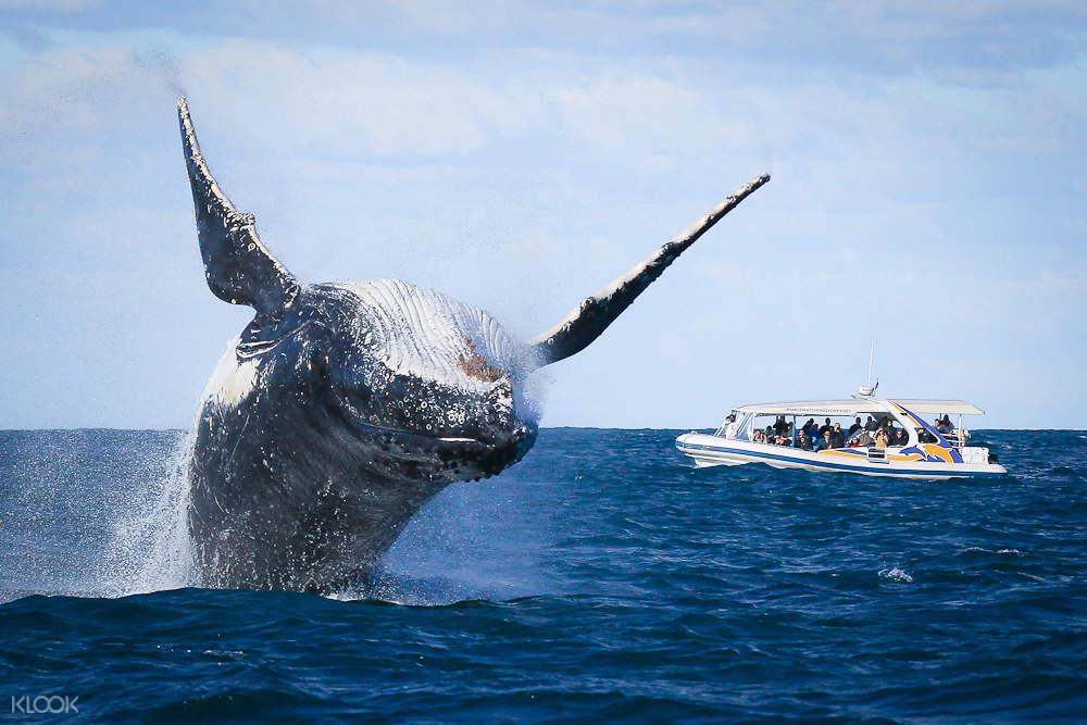 雪梨賞鯨遊輪