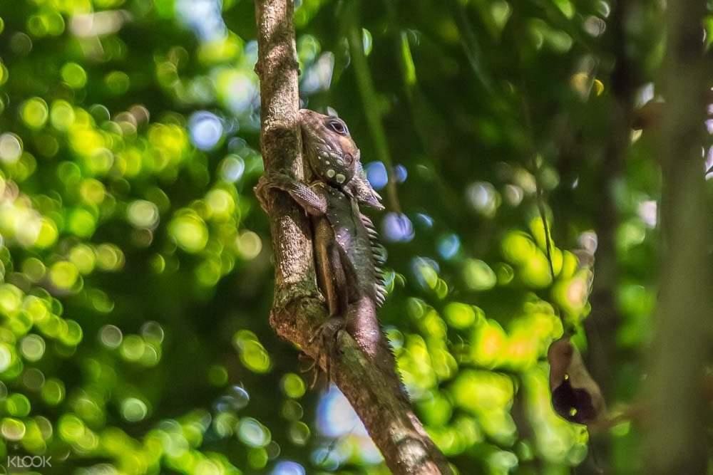 bearded dragon on branch