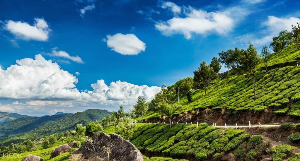tea plantation munnar