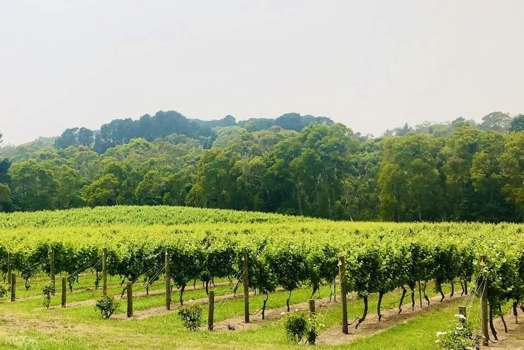 mornington peninsula wine region