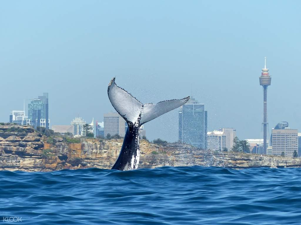 Whale Watching Cruise with Lunch