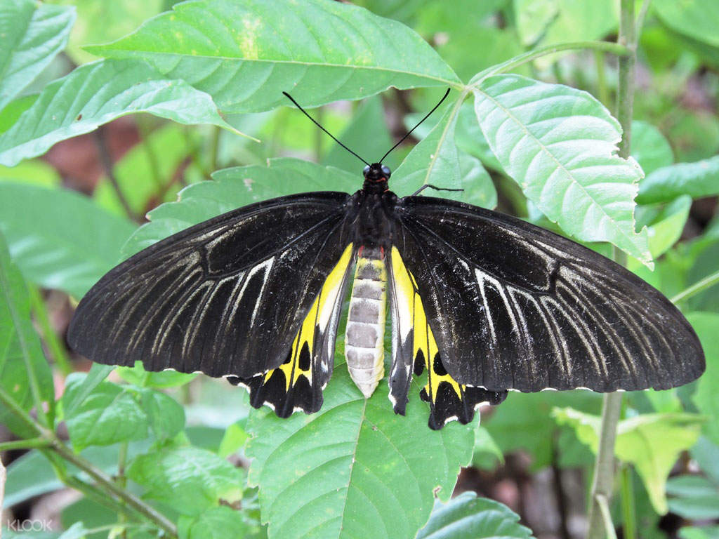 Have a chance to see various species of butterfly when visiting Butterfly Hill