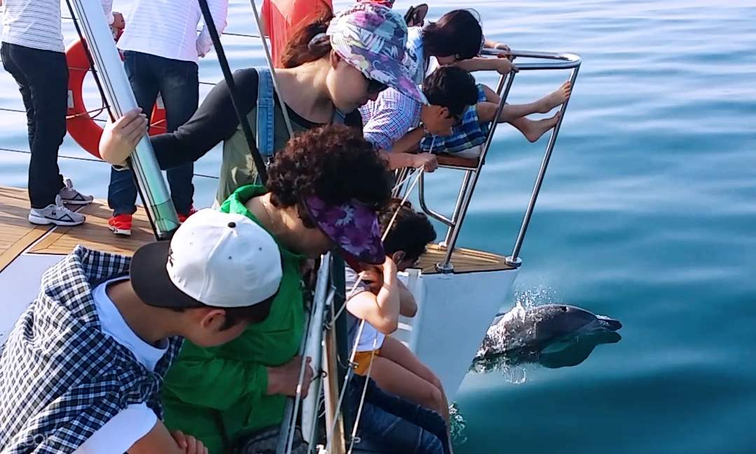 Be in awe of the location's emerald waters and get a chance to spot dolphins along the way if you are lucky!