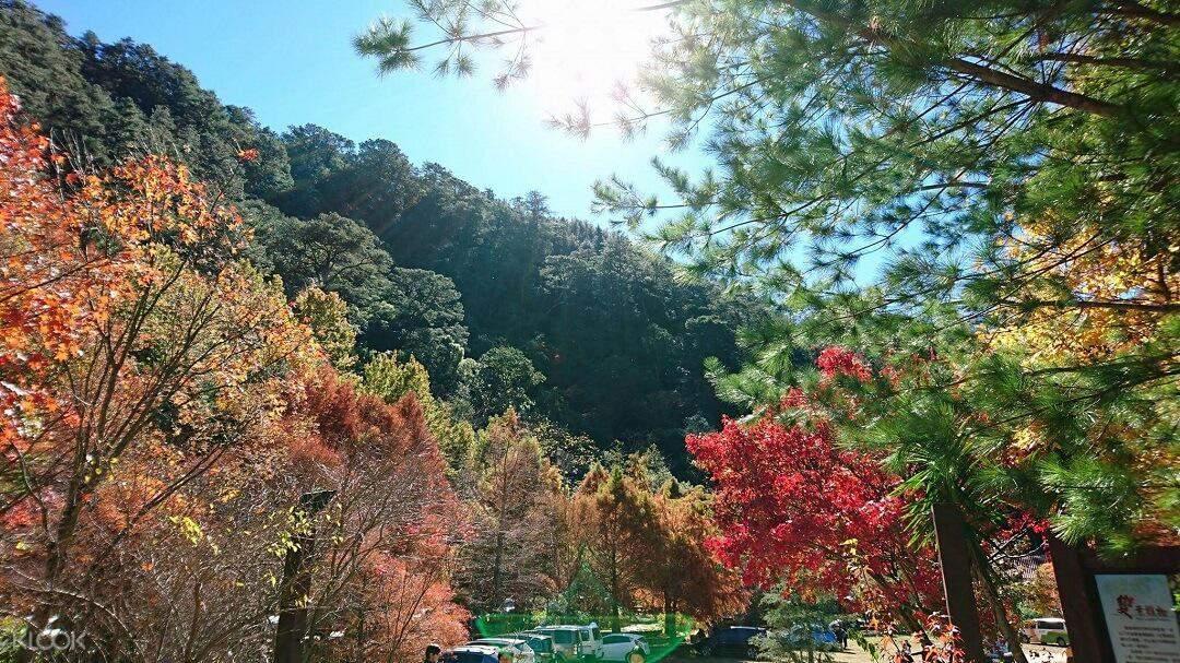 宜兰 武陵农场森呼吸一日游