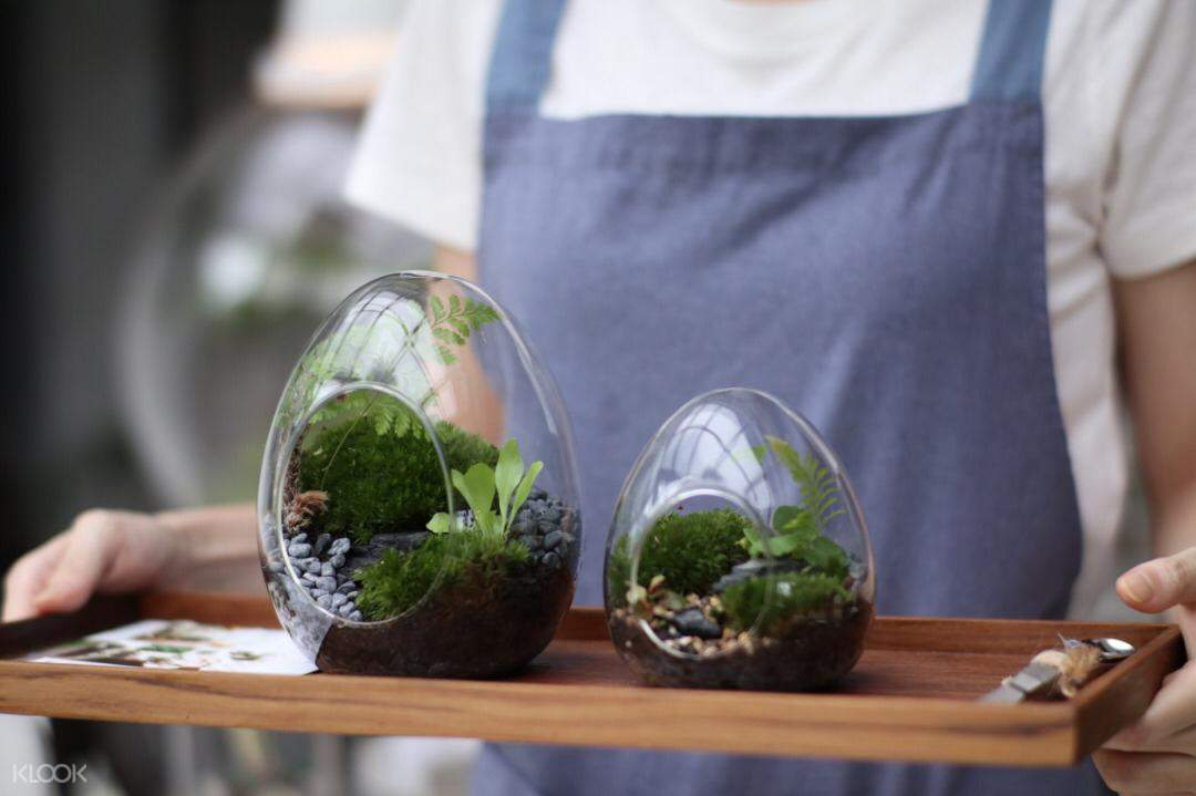 DIY egg forest with blue packaging
