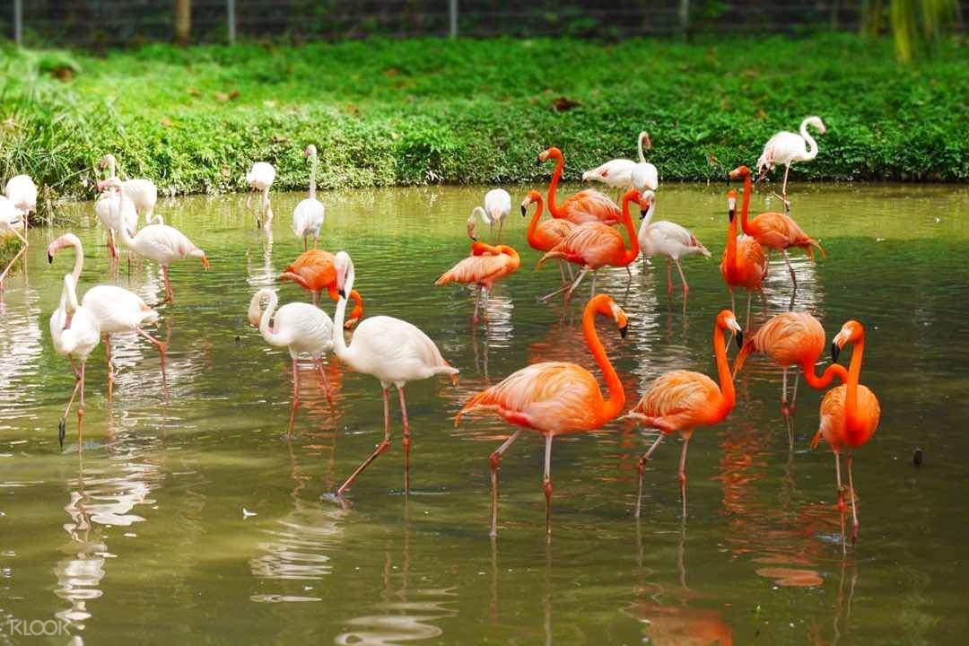 Malaysia National Park