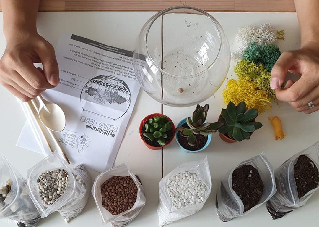 Open Succulent Terrarium DIY Kit