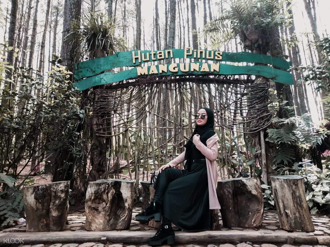 Tour De Pinus Forest
