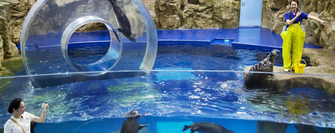 energetic otters in aqua planet