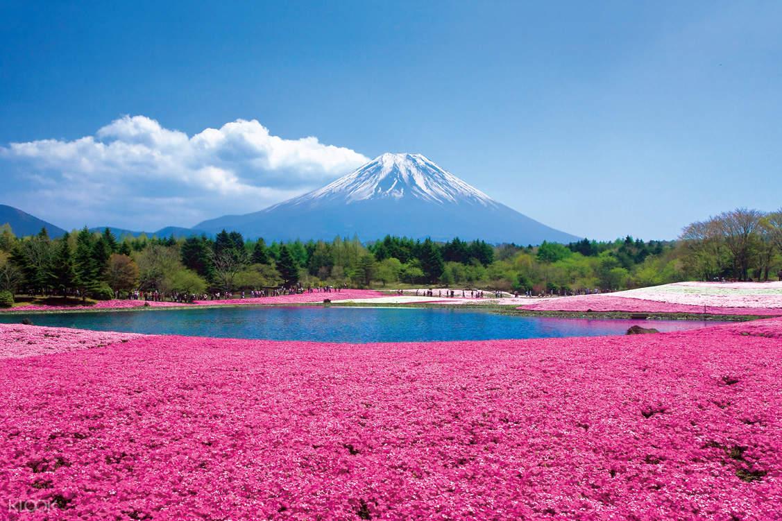 flowers surrounding the base of mt. fuji