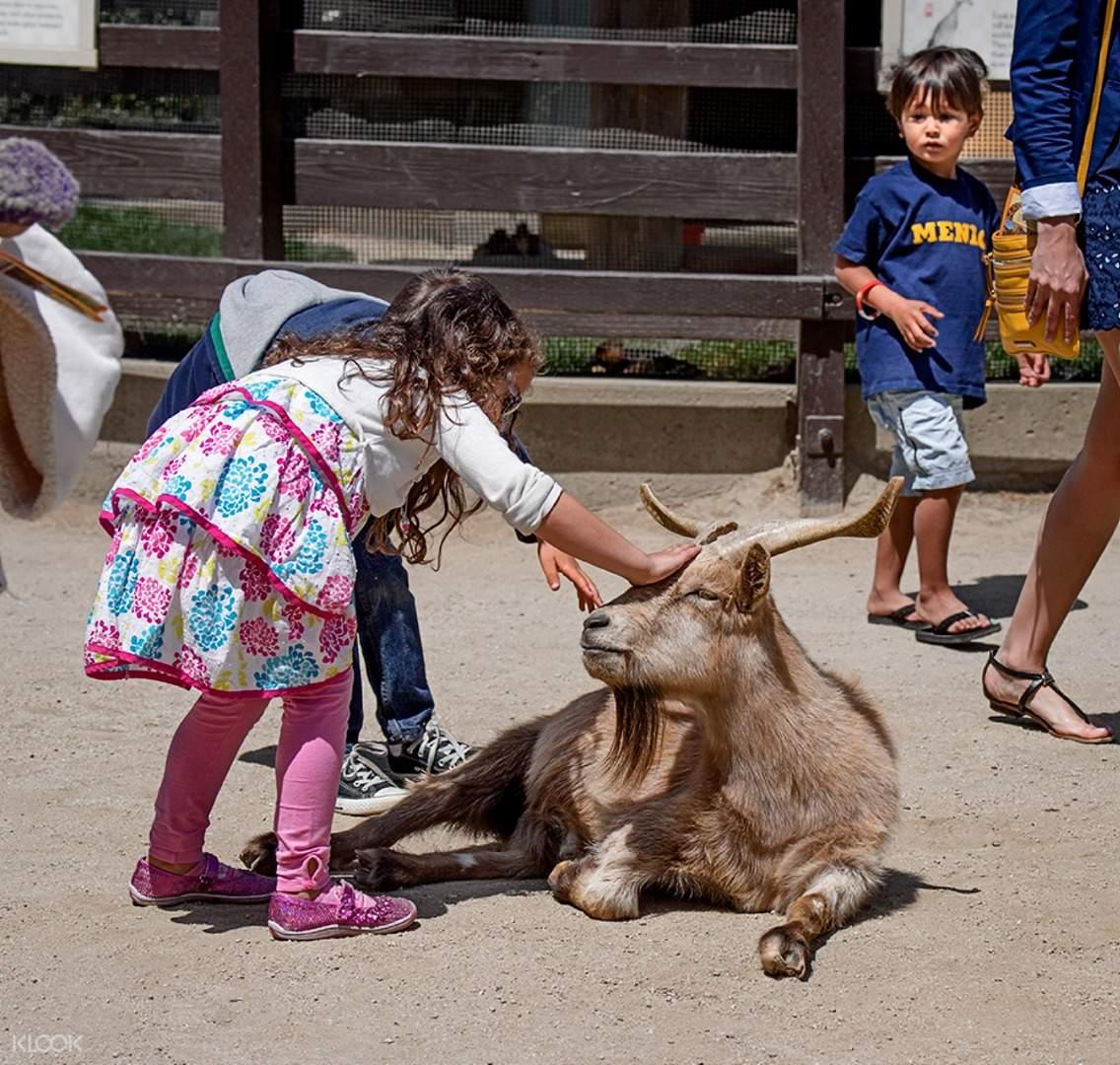 san francisco zoo ticket
