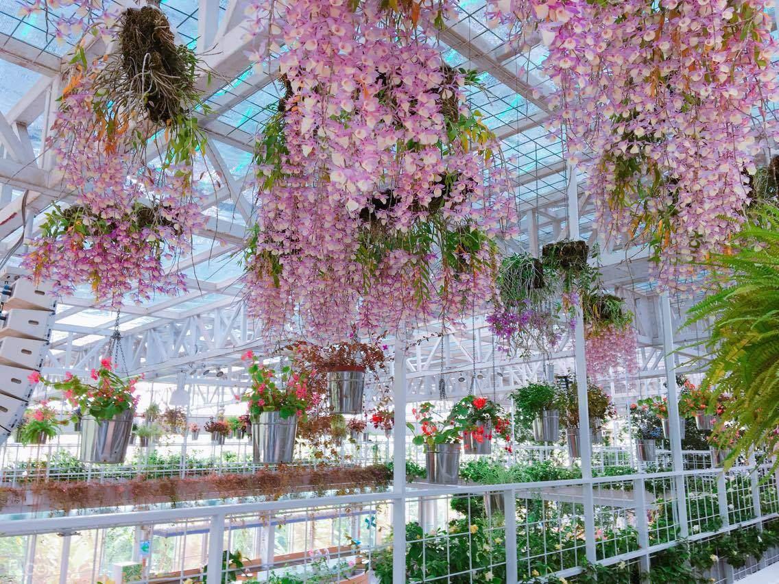 走進香草菲菲,觀賞周邊的植物與花卉,找到自己內心的寧靜
