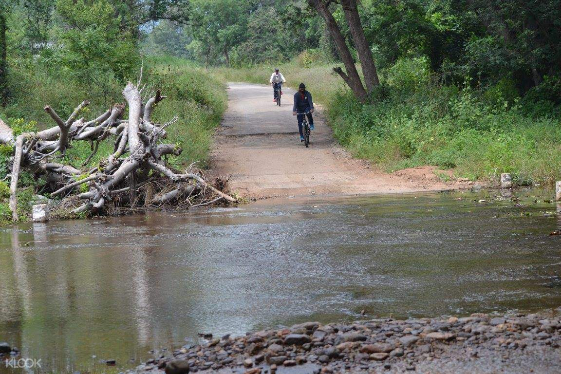 Muthathi森林