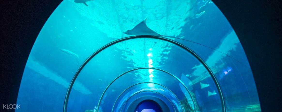 水族館必拍的大洋池海底隧道,抬頭仰望超過180度的全景海洋世界