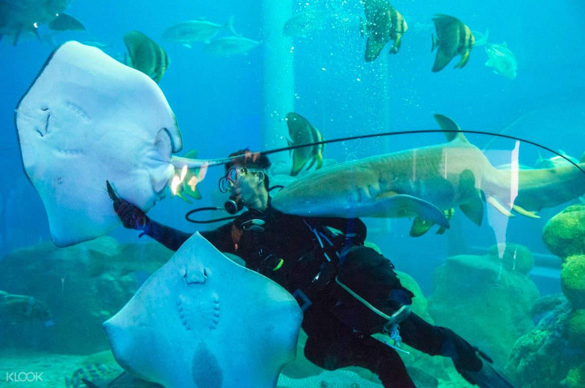 觀賞精彩的潛水餵食秀,會跟海洋生物及觀眾趣味互動,絕無冷場