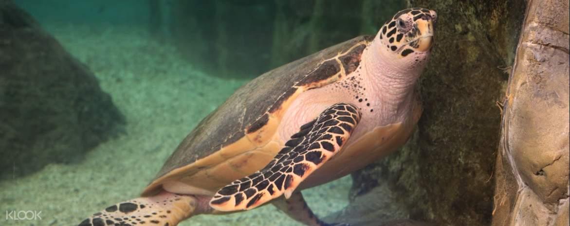 澎湖水族館重視生態教育,希望大家參觀完水族館後,能有正確的保育觀念
