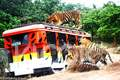 have an action-packed afternoon at zoobic safari
