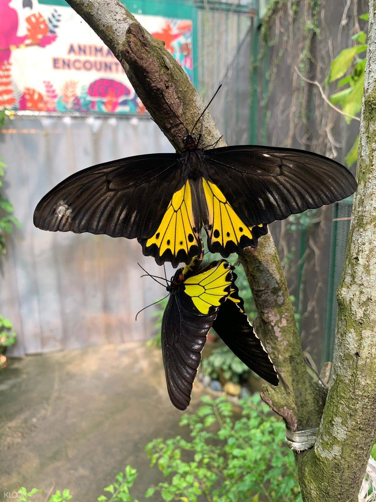 Singapore Butterfly Park and Insect Kingdom