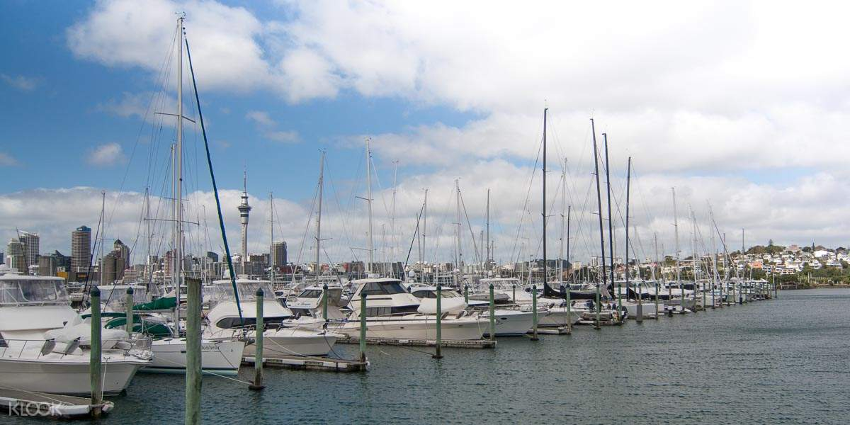tours in auckland new zealand