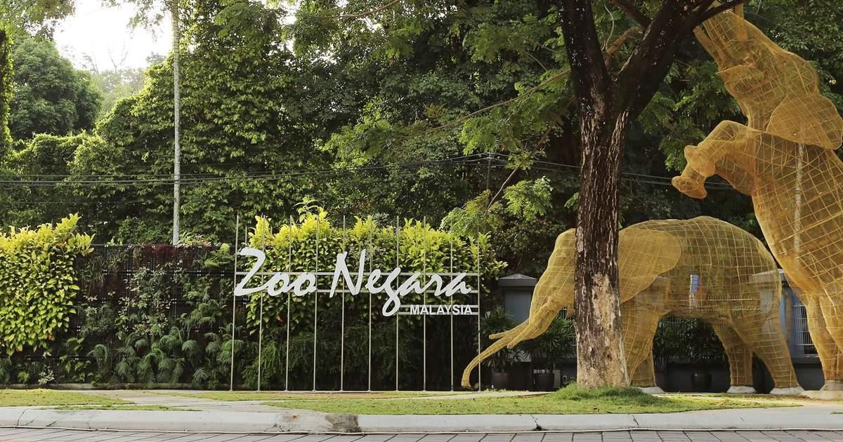 Zoo Negara National Zoo Of Malaysia Klook Malaysia