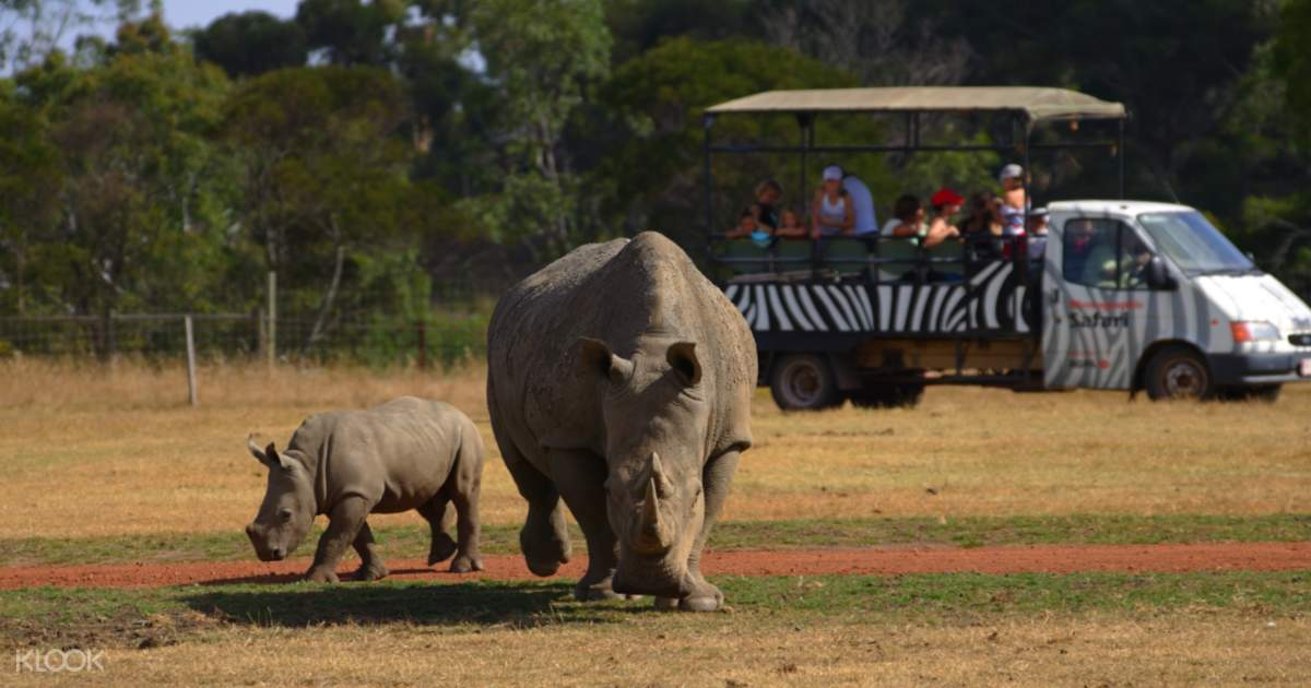 Off Road Safari at Werribee Open Range Zoo - Klook