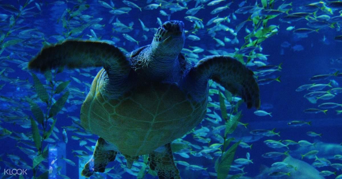 SEA LIFE Aquarium Admission Ticket - Klook