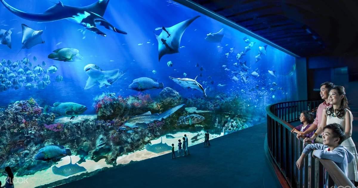 """Kết quả hình ảnh cho Sea Aquarium"""""""