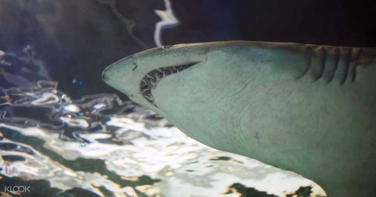 Sydney Sea Life Aquarium Discount Entry (Bar Code Direct