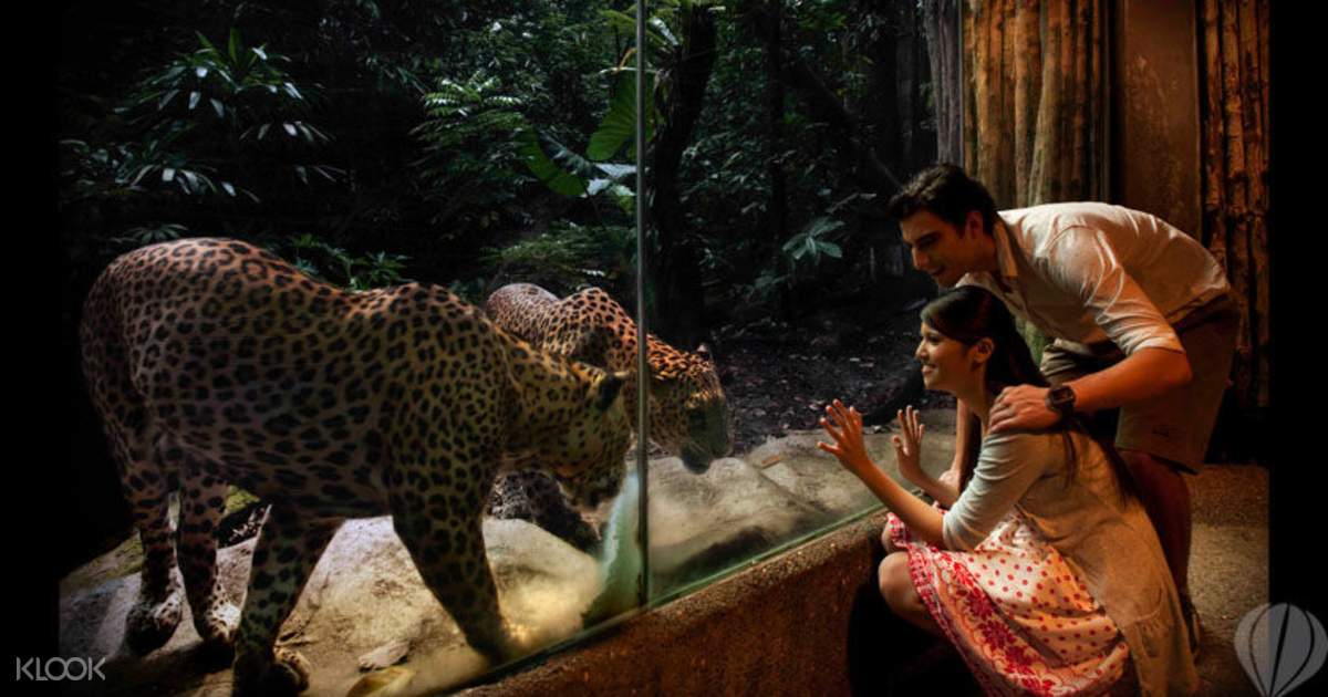 Singapore Night Safari Open Date Tickets Klook