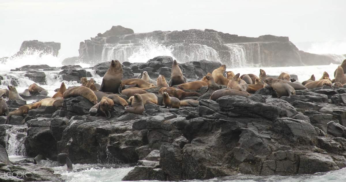 Wisata Ekspres EcoBoat menuju Seal Rocks & The Nobbies- Klook