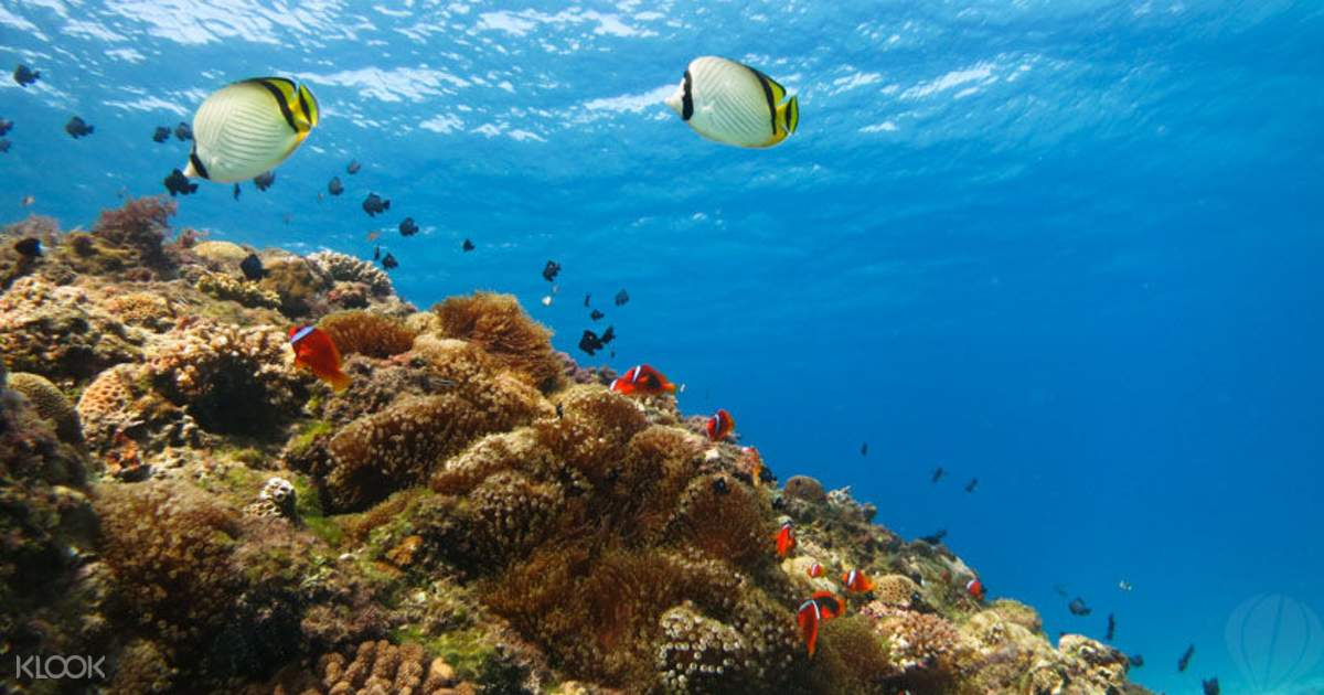Discover Scuba Diving - Klook