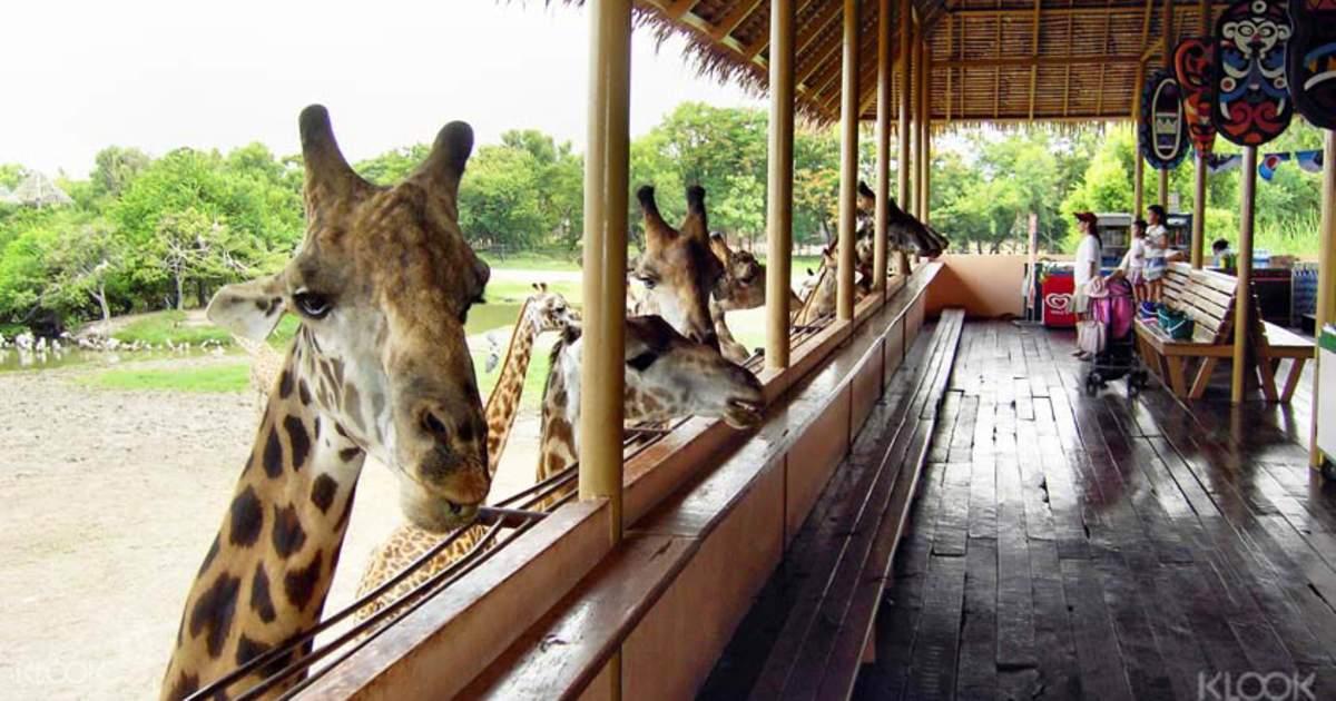 Safari World Tickets - Meet Exotic Animals in Bangkok! - Klook