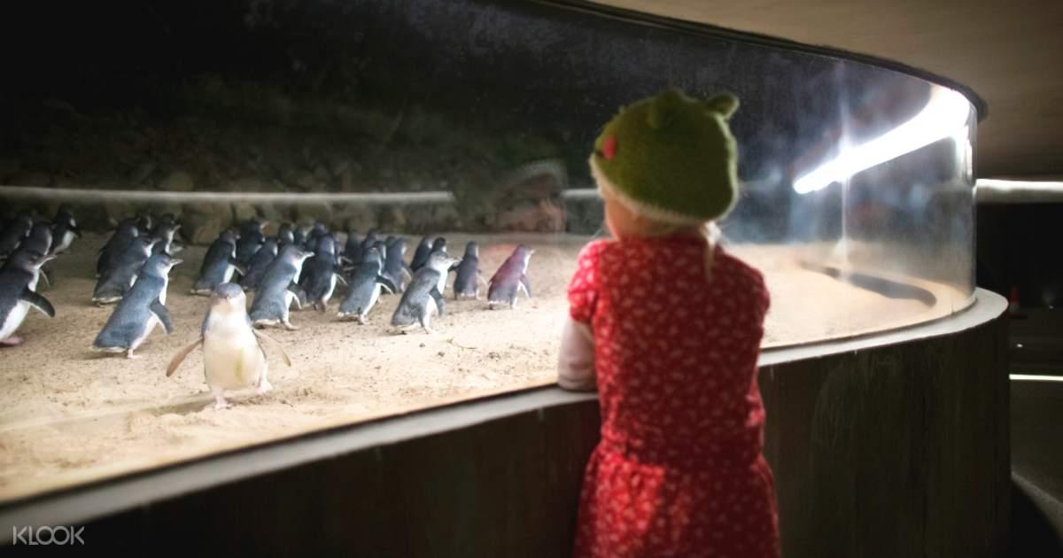 Penguin Parade Tickets - Klook