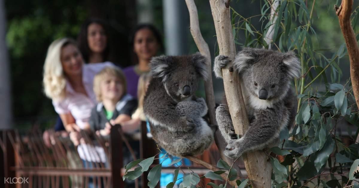 Melbourne zoo discount coupon