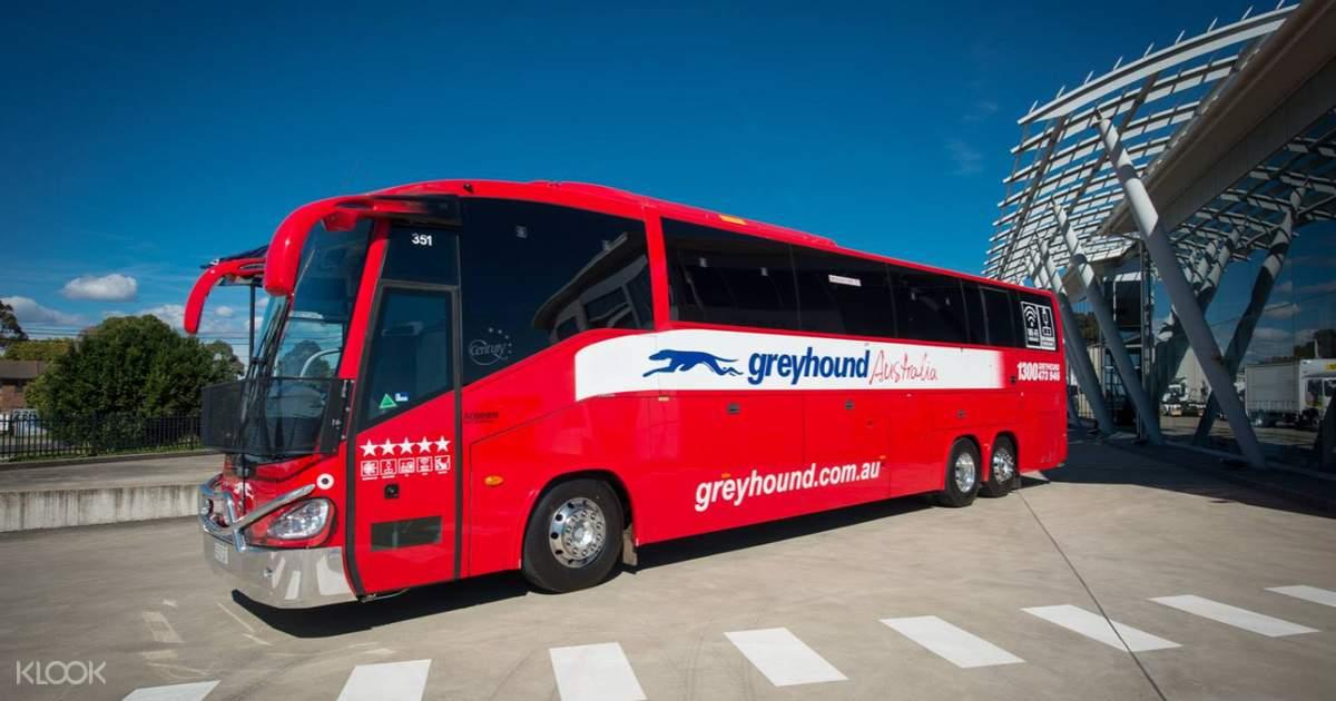 Greyhound Australia Whimit Coach Pass From Brisbane Australia Klook Australia