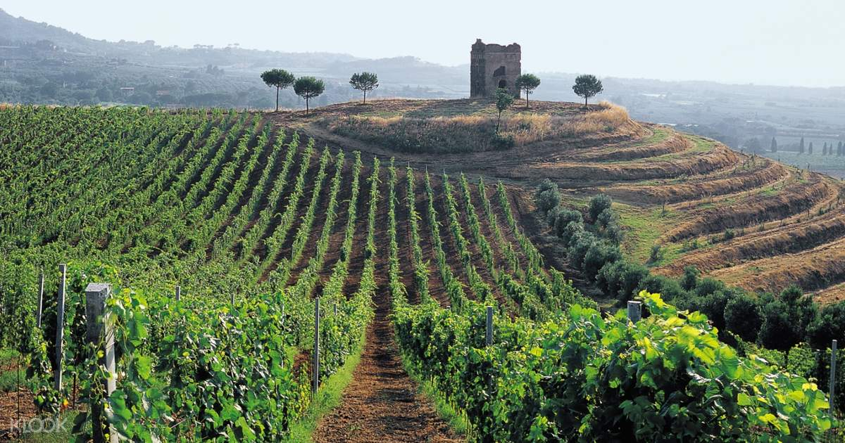 Roman Countryside Vineyards Tour in Rome with Wine