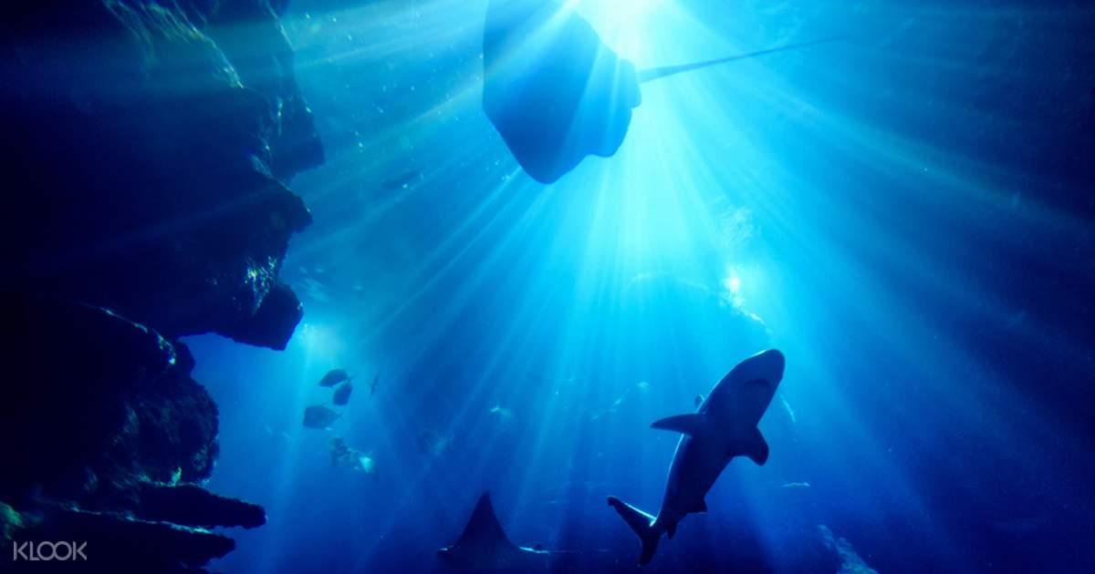 Sea Life London Aquarium Tickets - Klook - Klook